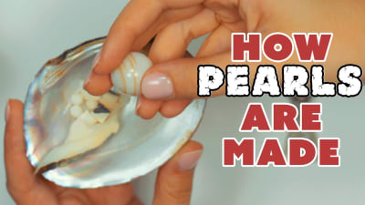 All About Pearls and How They're Made