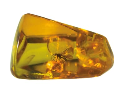 Hymenoptera inclusions in Mexican Amber